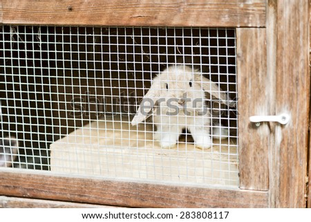 baby rabbit with floppy ears in a stall