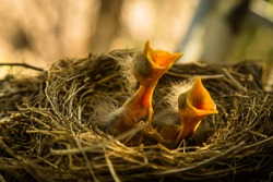 Baby robin waiting on their mother