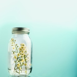 Baby's breath flower in a glass jar. Gypsophila paniculata. Love and Safe nature concept