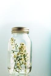 Baby's breath flowers in a glass jar. Selective focus. Gypsophila paniculata.
