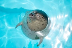 Baby seals born in an aquarium in Japan