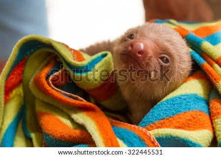 Baby sloth in colorful striped blanket
