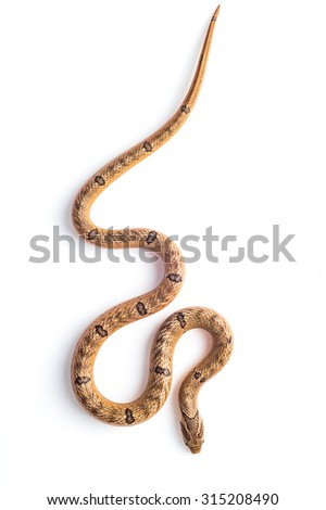 baby snake isolated