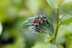 Baby Spider on leaf