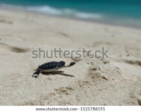Baby turtle hatching, save turtles