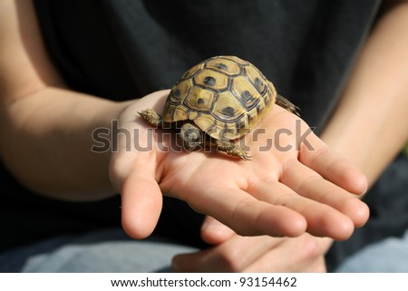 Baby turtle, Testudo hermanni, on a girl's hand