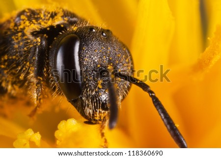 baby wasp covered with pollen in the middle of flower