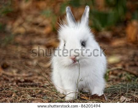 Baby white rabbit in grass, Cute Rabbit