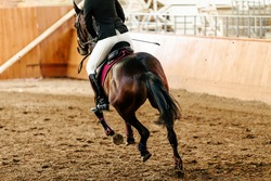 back horsewoman on horse bay color riding arena