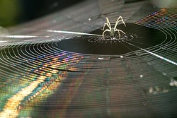 back lit spider on web, inverted