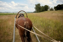 Back of a horse pulling a cart. Steering a horse cart. View on a horse back from a cart. Horse on a grass field