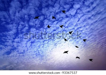 Back of bird flying over dramatic sky. - stock photo