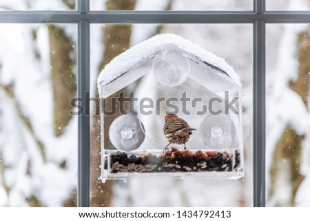 Back of red male house finch bird sitting perched on glass window feeder perch eating sunflower seeds during winter snow weather