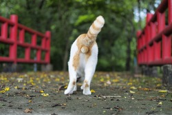 Back side cat walk in the garden with blur background.