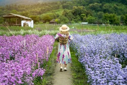 Back side of Asian woman is enjoy traveling at Margaret flower field in Chiangmai, Thailand.