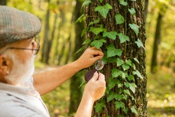 Back to nature. Elderly man examine tree leaves with magnifying glass. Old person in woods exploring nature. Nature observation is relaxation. Save trees, save nature. Environment day.