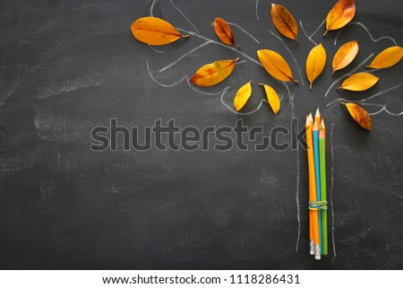 Back to school concept. Top view image of pencils next to tree sketch with autumn dry leaves over classroom blackboard background.