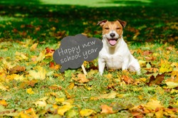 Back to school concept with happy dog and greeting on blackboard