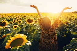 Back up view of joyful young woman raising hands up and enjoy warm sunny weather outside. Look up in sky. Stand alone in middle of big sunflower's field. August or September period. Harvest time