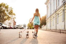 Back view of a young woman walking her dogs on the city streets