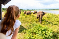 Back view of adorable little girl on safari in Sri Lanka observing elephants from open vehicle