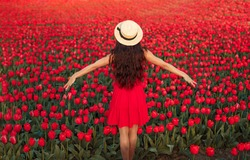 Back view of anonymous female blogger with outstretched arms standing in red tulip field and enjoying freedom in april in Netherlands