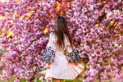 Back view of beautiful girl in a pink traditional Ukrainian dress in the blooming garden (cherry blossom). women's back. spring time