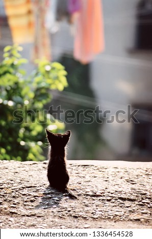 Back view of cute little black kitten sitting on ground in town street at sunny day. Film scan, grainy image.