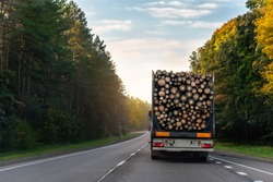 back view of long heavy industrial wood carrier cargo vessel truck trailer with big timber pine, spruce, cedar driving on highway road with blue sky background. Timber export and shipping concept