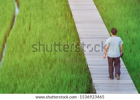 Back view of male walk and take photography along the bamboo path that crossed through the fields in the evening before the sun set down on the horizon. #1536923465