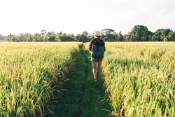 Back view of slim female agronomy with travel rucksack walking at path in middle of rice fields exploring international agriculture cultivation, tourist with rucksack visiting greenery plantation