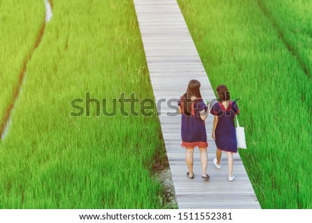 Back view of two female friends walk and take photography along the bamboo path that crossed through the fields in the evening before the sun set down on the horizon. #1511552381