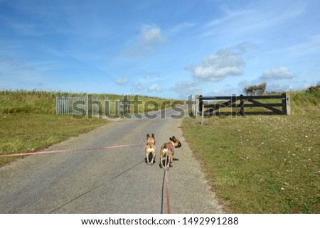 Back view of two French Bulldog dogs on long leashes walking through national park 'De Muy' in the Netherlands on island Texel Foto stock ©