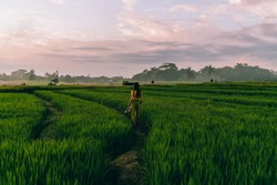 Back view of young woman in casual clothing with long hair carrying hat while walking on path through rice plantation on Philippines