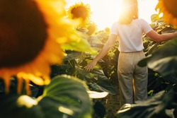 Back view picture of woman's silhouette walking around sunflowers in middle of field in morning or evening. Sun shines bright outside in sky. Harvest time in July or August