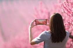 Back view portrait of a woman taking photo of a landscape with a smart phone in springtime in a pink flowered field