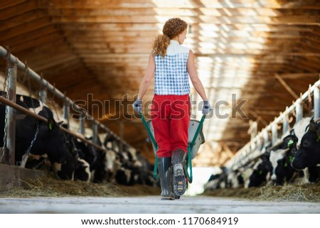 Back view portrait of young woman pushing trolley walking across cowshed at farm, copy space