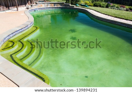 Back yard swimming pool behind modern single family home at pool opening with green stagnant algae filled water before cleaning