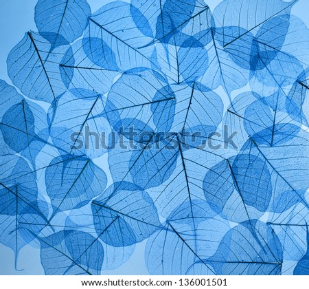 backdrop texture of colorful blue floral leaves #136001501