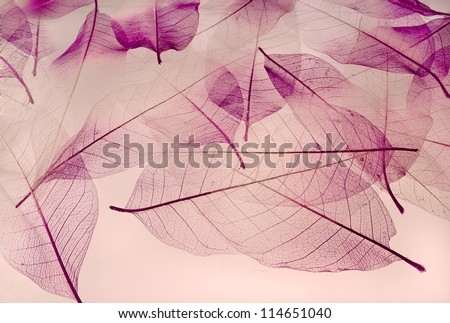 backdrop texture of colorful floral leaves - Shutterstock ID 114651040