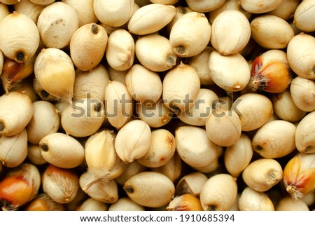 Background and texture of sugar sorghum, top view. Sorghum seed texture, top view. Sorghum seed macro. High-quality seeds of sugar sorghum in the form of texture, top view. Zdjęcia stock ©