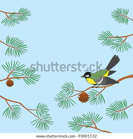 Background, bird titmouse sitting on pine branch against blue sky