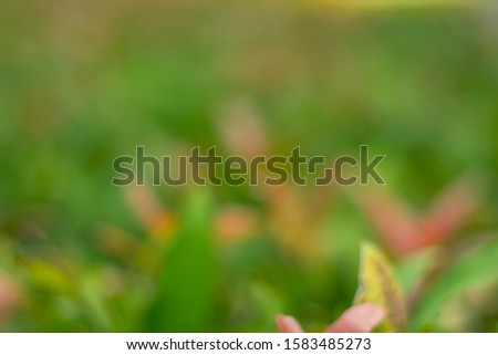 Background blur, nature blur, nature green blurred beautiful background
