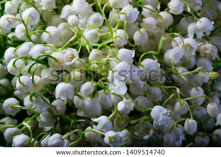 Background bouquet. Lily of the valley flowers blossom. Macro photo nature