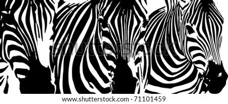 background by zebras