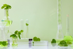 Background Centella asiatica for  Biological experimentpresentation Centella asiatica (Gotu kola) leaves and green water in biological test tubes. Production of cosmetics based on Centella asiatica