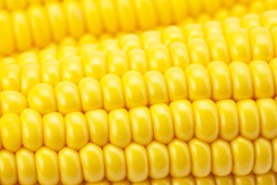 Background corn