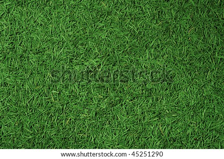 Background created with needles of a conifer - Shutterstock ID 45251290