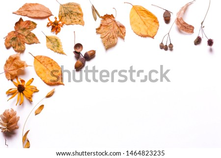 Background creative of yellow dry leaves, acorn, walnut, flowers. concept of autumn. Pastel colors. Top view, flat #1464823235
