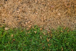 Background dead dry grass green